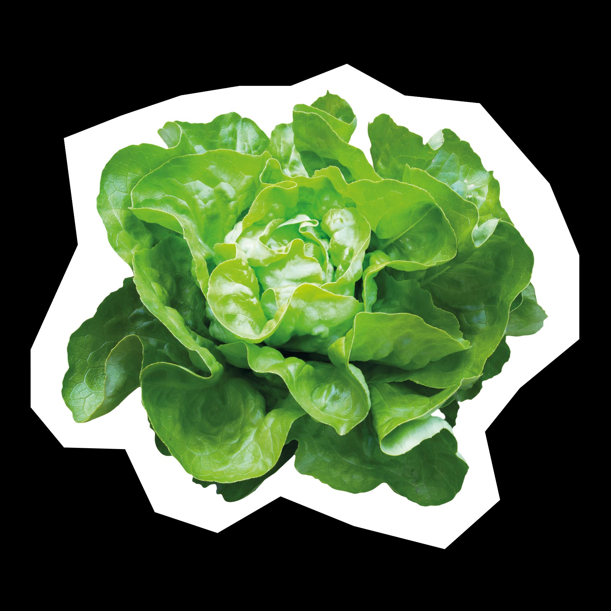 La Stratégie Créative - Une agence qui ne vous raconte pas de salade